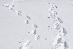 χρονικός χειμώνας χιονιού ιχνών Στοκ Εικόνα