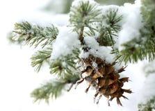 χρονικός χειμώνας Στοκ Εικόνες