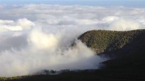 Χρονικό σφάλμα της θάλασσας των σύννεφων που κινούνται πέρα από το δάσος στο εθνικό πάρκο Teide, Tenerife, Κανάρια νησιά, Ισπανία απόθεμα βίντεο