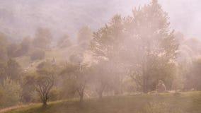 Χρονικό σφάλμα της ομίχλης βουνών της Misty που φυσά πέρα από το βουνό με τα δέντρα πεύκων Το κρύο πρωί με την ομίχλη καλύπτει το φιλμ μικρού μήκους