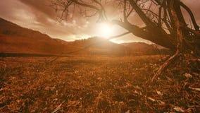 Χρονικό σφάλμα του δέντρου θανάτου και της ξηράς κίτρινης χλόης στο mountian τοπίο με τα σύννεφα και τις ακτίνες ήλιων Οριζόντια  φιλμ μικρού μήκους