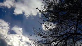 Χρονικό σφάλμα των σύννεφων πέρα από το δέντρο απόθεμα βίντεο