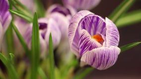 Χρονικό σφάλμα λουλουδιών απόθεμα βίντεο