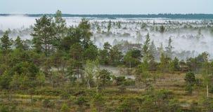 Χρονικό σφάλμα της υδρονέφωσης που αυξάνεται από ένα δάσος υγρότοπου απόθεμα βίντεο