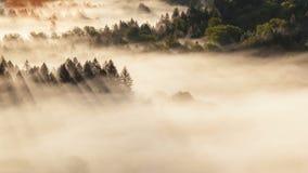Χρονικό σφάλμα της χαμηλής κινούμενης ομίχλης με τις ακτίνες ήλιων πέρα από τον αμμώδη ποταμό στην ανατολή στο Όρεγκον 4k απόθεμα βίντεο