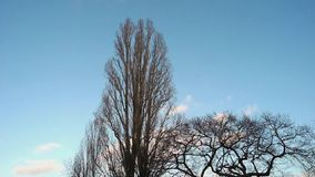 Χρονικό σφάλμα των γυμνών δέντρων στον αέρα και τον μπλε χειμερινό ουρανό με τα άσπρα σύννεφα απόθεμα βίντεο