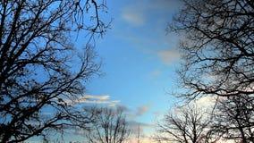 Χρονικό σφάλμα των μαλακών σύννεφων μέσω των κλάδων στο ηλιοβασίλεμα φιλμ μικρού μήκους