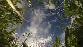 Χρονικό σφάλμα των σύννεφων και των λουλουδιών φιλμ μικρού μήκους