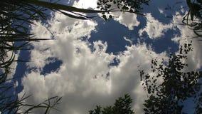 Χρονικό σφάλμα των σύννεφων και των λουλουδιών απόθεμα βίντεο