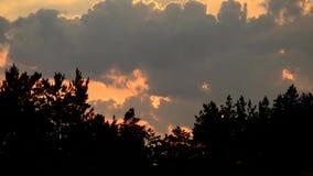 Χρονικό σφάλμα των σύννεφων στο ηλιοβασίλεμα στον ουρανό πέρα από τις σκιαγραφίες δέντρων φιλμ μικρού μήκους
