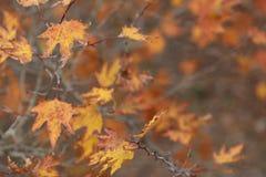 Χρονικό υπόβαθρο φθινοπώρου στοκ εικόνες