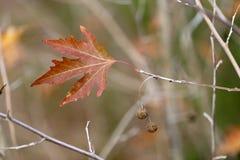 Χρονικό υπόβαθρο φθινοπώρου στοκ εικόνα