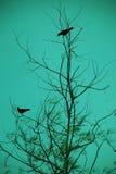 χρονολόγηση πουλιών Στοκ φωτογραφία με δικαίωμα ελεύθερης χρήσης