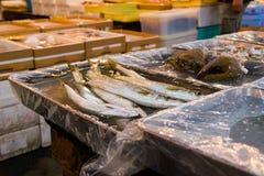 Χρονοτριβεί τα ψάρια πώλησης στην αγορά ψαριών tsukiji είναι το μεγαλύτερο W Στοκ Φωτογραφίες