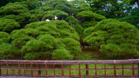 300χρονο δέντρο πεύκων κήπος ιαπωνικά στοκ φωτογραφίες με δικαίωμα ελεύθερης χρήσης