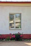 Χρυσάνθεμα του Μπους κάτω από το παράθυρο Στοκ Εικόνα