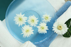 Χρυσάνθεμο flower spa Στοκ Εικόνες