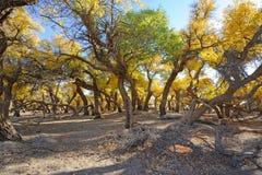 Χρυσά δέντρα λευκών Στοκ φωτογραφία με δικαίωμα ελεύθερης χρήσης