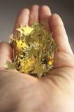 χρυσά αστέρια εκμετάλλευσης χεριών Στοκ εικόνα με δικαίωμα ελεύθερης χρήσης