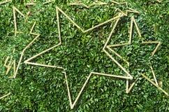 Χρυσά αστέρια σε έναν θάμνο κιβωτίων Στοκ εικόνες με δικαίωμα ελεύθερης χρήσης