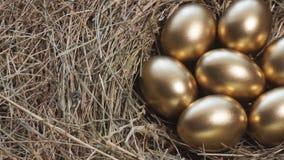 Χρυσά αυγά στα χρυσά αυγά φωλιών στην κινηματογράφηση σε πρώτο πλάνο φιλμ μικρού μήκους