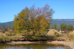 Χρυσά δέντρα το χειμώνα Στοκ φωτογραφία με δικαίωμα ελεύθερης χρήσης