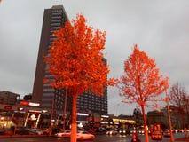 Χρυσά δέντρα φθινοπώρου στο Arbat Στοκ εικόνες με δικαίωμα ελεύθερης χρήσης