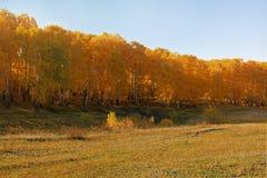 χρυσά δέντρα Στοκ φωτογραφίες με δικαίωμα ελεύθερης χρήσης