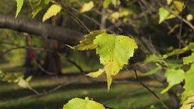 Χρυσά, κίτρινα, και φύλλα χαμόγελου που φυσούν στον αέρα πέρα από τα πράσινα δέντρα στο πάρκο, υπόβαθρο φθινοπώρου μαρασμός απόθεμα βίντεο