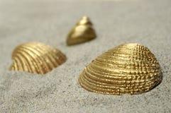 χρυσά κοχύλια Στοκ φωτογραφίες με δικαίωμα ελεύθερης χρήσης