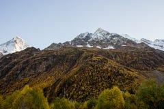 Χρυσά ξύλινα και χιονισμένα βουνά Στοκ φωτογραφία με δικαίωμα ελεύθερης χρήσης