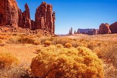 Χρυσά λουλούδια της ερήμου Στοκ Φωτογραφίες