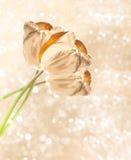 Χρυσά λουλούδια τουλιπών πέρα από το θολωμένο υπόβαθρο Στοκ Εικόνα