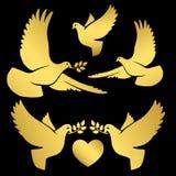 Χρυσά πετώντας περιστέρια στο Μαύρο απεικόνιση αποθεμάτων