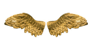 Χρυσά φτερά Στοκ φωτογραφία με δικαίωμα ελεύθερης χρήσης