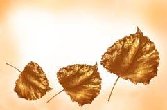 χρυσά φύλλα ανασκόπησης Στοκ Εικόνα