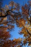 Χρυσά φύλλα Στοκ φωτογραφία με δικαίωμα ελεύθερης χρήσης
