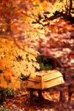 Χρυσά φύλλα πτώσης και κίτρινα χρώματα φθινοπώρου επίδειξης βαρκών υπόλοιπου κόσμου Στοκ Εικόνα