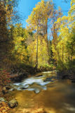 Χρυσά φύλλα στο χρυσό νερό Στοκ Εικόνες