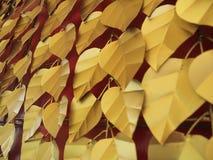 Χρυσά φύλλα Bodhi Στοκ Εικόνες