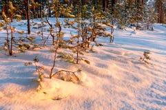 Χρυσά χρώματα ηλιοβασιλέματος στο χιόνι Στοκ εικόνες με δικαίωμα ελεύθερης χρήσης
