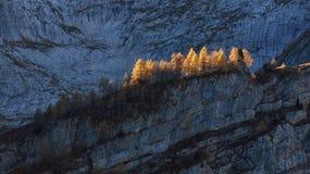 Χρυσά larchs το φθινόπωρο, απότομοι απότομοι βράχοι Στοκ Φωτογραφία