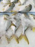 Χρυσά pomfret ψάρια Στοκ Φωτογραφία