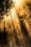 Χρυσές ακτίνες ήλιων μέσω των θάμνων σε ένα misty πρωί Στοκ Φωτογραφία