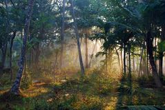 χρυσές ακτίνες Στοκ φωτογραφία με δικαίωμα ελεύθερης χρήσης
