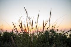 Χρυσές εγκαταστάσεις ηλιοβασιλέματος στοκ φωτογραφίες