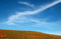 Χρυσές παπαρούνες Καλιφόρνιας και κίτρινα λογικά λουλούδια στην υψηλή έρημο νότιας Καλιφόρνιας Στοκ εικόνες με δικαίωμα ελεύθερης χρήσης