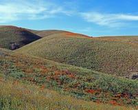 Χρυσές παπαρούνες Καλιφόρνιας και πορφυρή φασκομηλιά στην υψηλή έρημο νότιας Καλιφόρνιας Στοκ Εικόνες