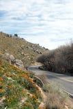 Χρυσές παπαρούνες Καλιφόρνιας κοντά στη λίμνη Isabella Στοκ Εικόνα