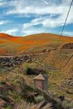 Χρυσές παπαρούνες Καλιφόρνιας στην υψηλή έρημο νότιας Καλιφόρνιας Στοκ φωτογραφία με δικαίωμα ελεύθερης χρήσης
